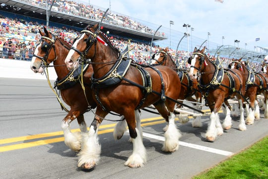 The Budweiser Clydesdales are back in the Super Bowl in Budweiser's latest commercial.