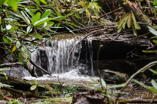 Bobs Creek State Natural Area's namesake waterway flows through the newly acquired property.