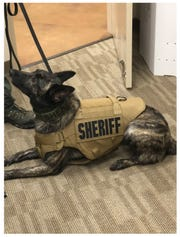 Luna, a member of the Madison County Sheriff's Office K-9 Unit, received one of two new bulletproof vests donated by local couples on Jan. 17 in Jackson, Tenn.