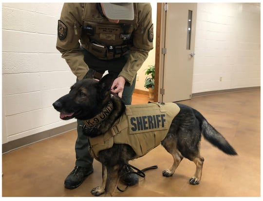 K-9 Deputy Matt Nierenberger fastens a leash on Timo, a member of the Madison County Sheriff's Office K-9 Unit. Timo received one of two new bulletproof vests donated by local couples on Jan. 17 in Jackson, Tenn.