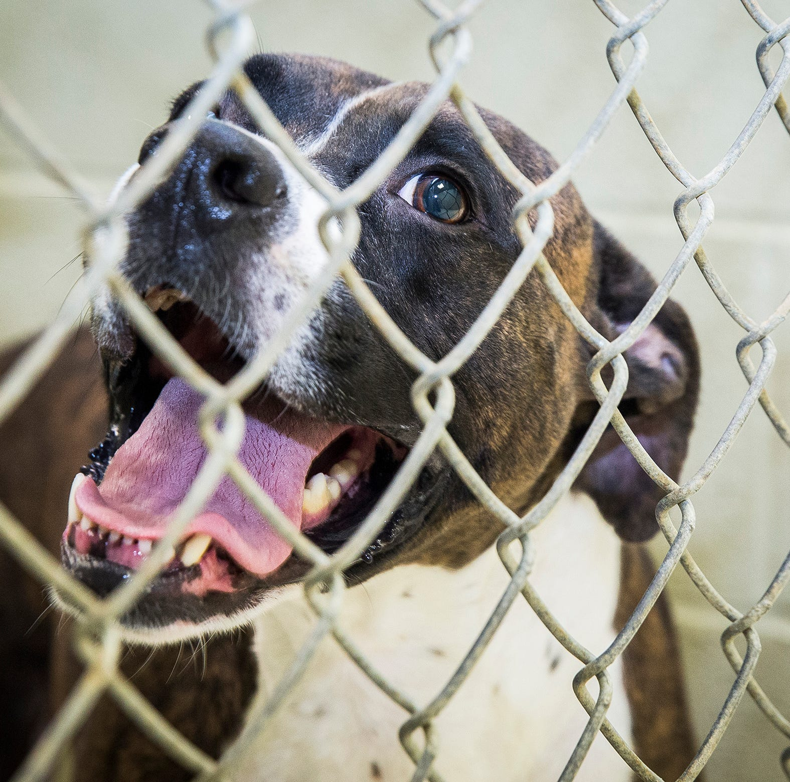 Muncie animal shelter receives grants to reduce adoption fees, for spay/neuter services