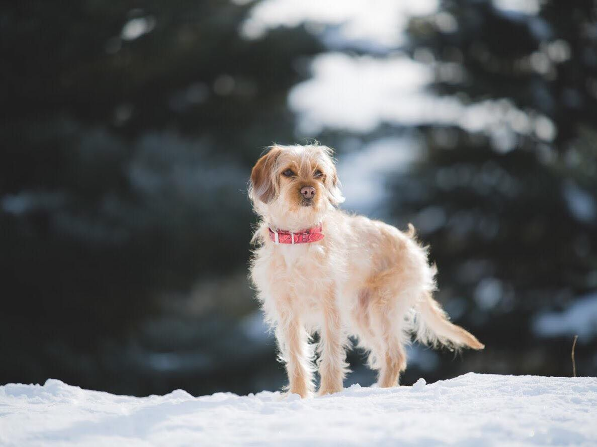 Sophie, a 4.5-year-old female terrier mix, was found killed by a gunshot wound to the neck near Red Hawk Golf Club Tuesday, Jan. 22.