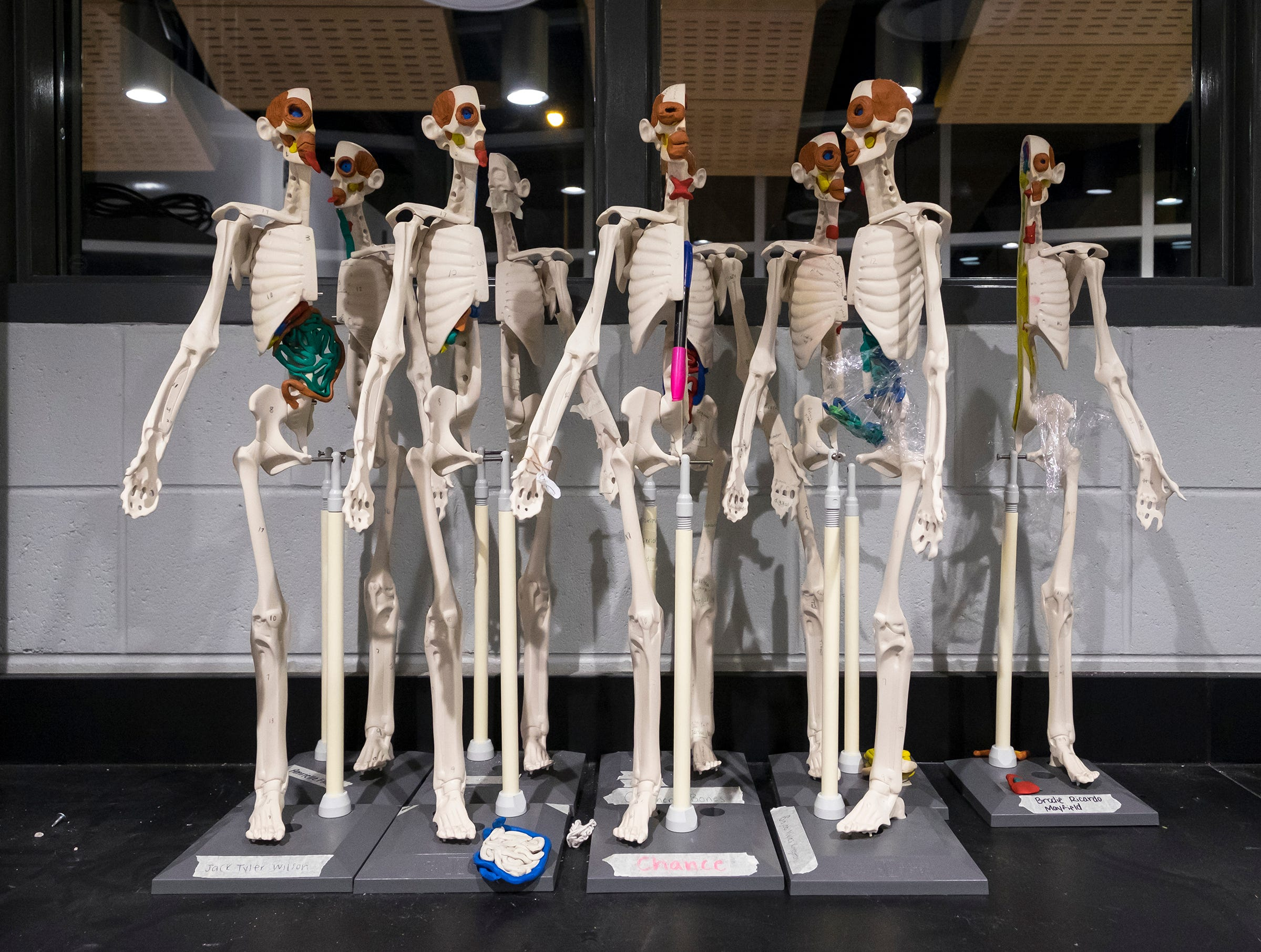 Models of the human anatomy sit on a counter in the biomedical lab in Port Huron Northern's new STEAM lab.