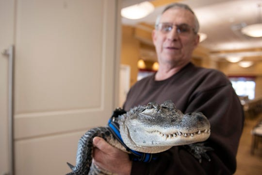Joie Henney holds up Wally, a 4-foot-long emotional support alligator, at the SpiriTrust Lutheran Village in York, Pa.  Henney says he received approval from his doctor to use Wally as his emotional support animal after not wanting to go on medication for depression. (Ty Lohr/York Daily Record via AP)
