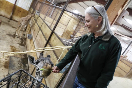 Dr. Jan Ramer, director of the Wilds, visits with a young giraffe. The Wilds, located near Cumberland, is one of the largest conservation parks in the country.