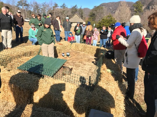 A bright and sunny Groundhog Day means six more weeks of winter. Greta the Groundhog at Chimney Rock park predicted just that in 2018.