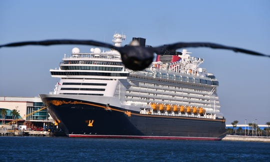A pelican flies towards the Disney Dream, which was docked at Port Canaveral Cruise Terminal 8 on Friday.