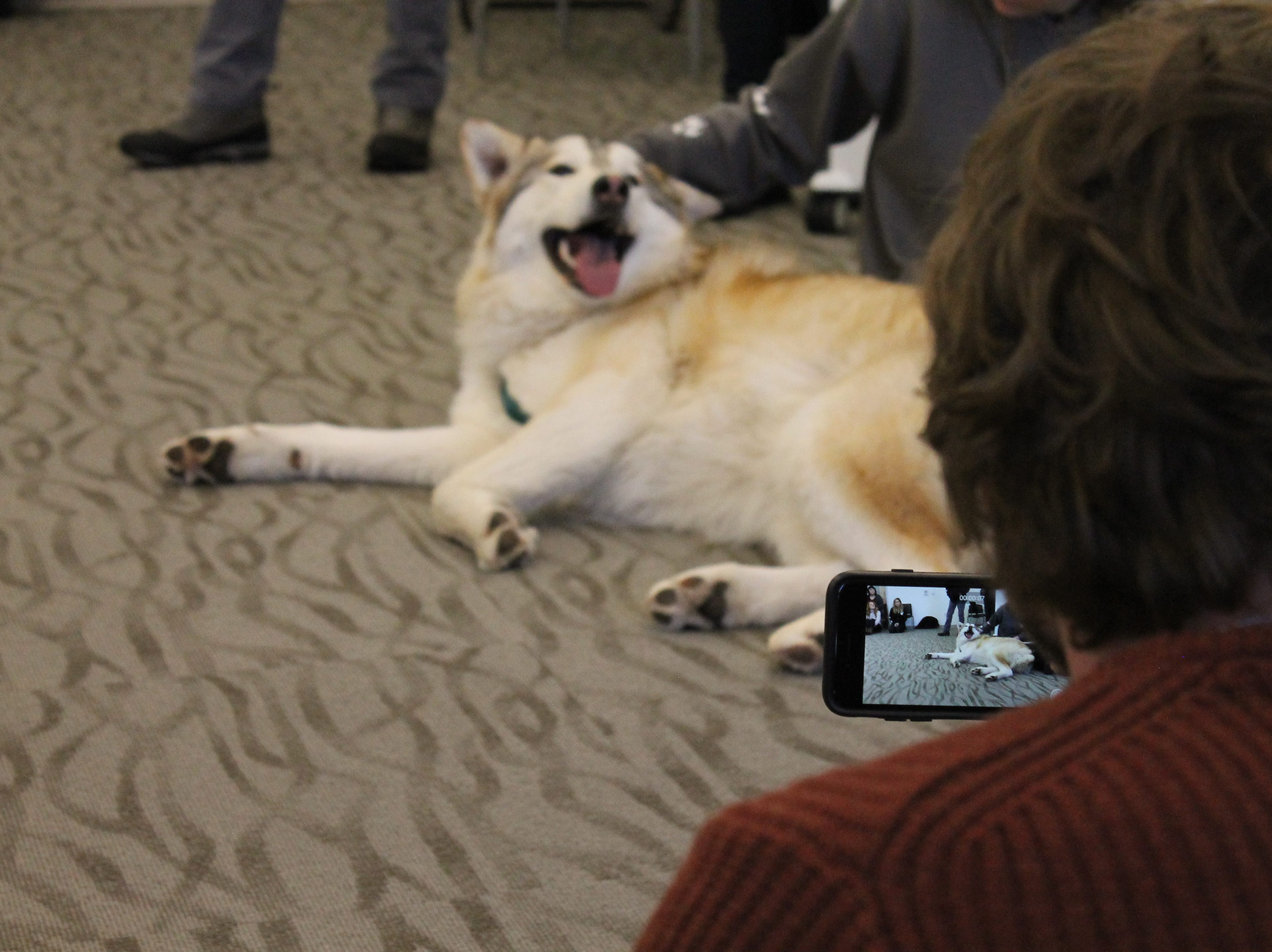 Brian Purcell takes a picture of Takota, a wolf dog, during class at Front Range Community College Friday. The class will work on a project designing posters to auction off at the W.O.L.F. Sanctuary's annual gala in May.