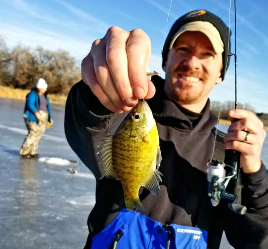 As a bluegill's metabolism slows down in winter, it can go weeks without eating. Bluegill are a non-native Montana fish species.