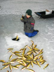 Perch are a popular species for ice fishing.
