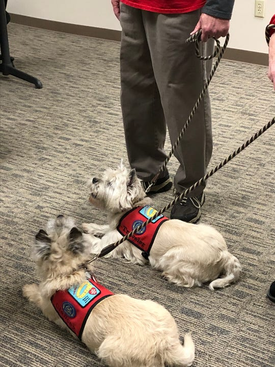 Therapy dogs Clancey and Traveler also attended the presentation of the new bulletproof vests at Madison County Sheriff's Office on Jan. 17. One of the new vests was donated in honor of the therapy dogs and their owners, Jack and Jackie Wood.