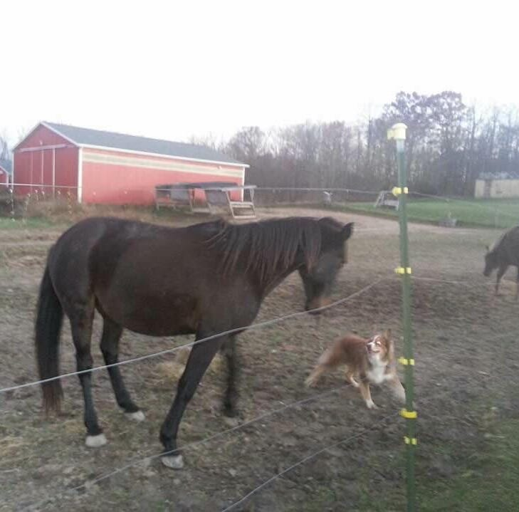 Rowdy, Charlotte horse missing for three weeks, found dead