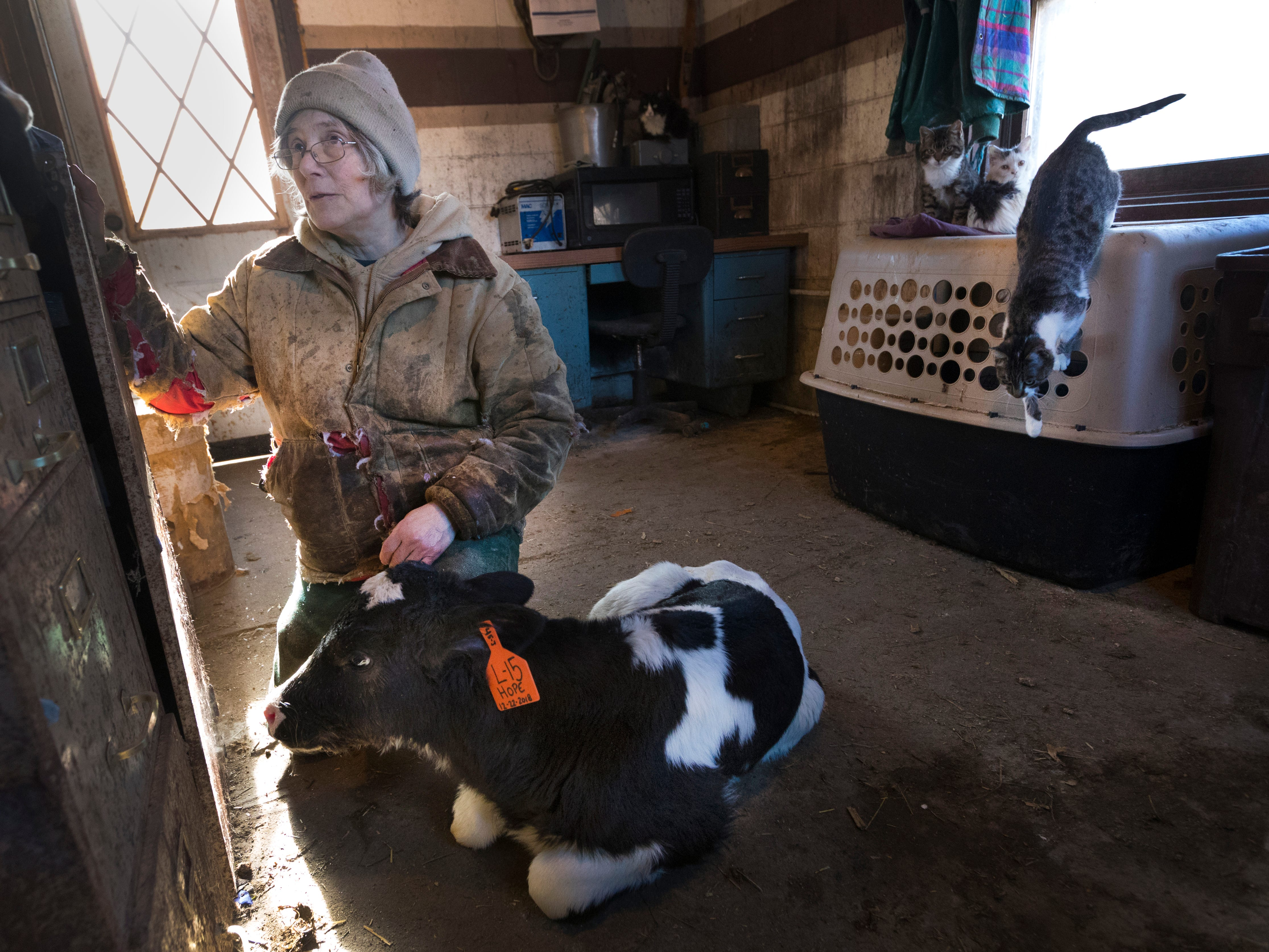 Sue Spaulding is shown with a 3-week-old calf, Hope, on the Spaulding family farm in Shell Lake Jan. 10. The calf, which had some health issues, was being kept in the office where it was warm. It died a few days later.
