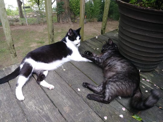 Mr. Kitty and Jinx went missing after a tornado hit Wetumpka last week.