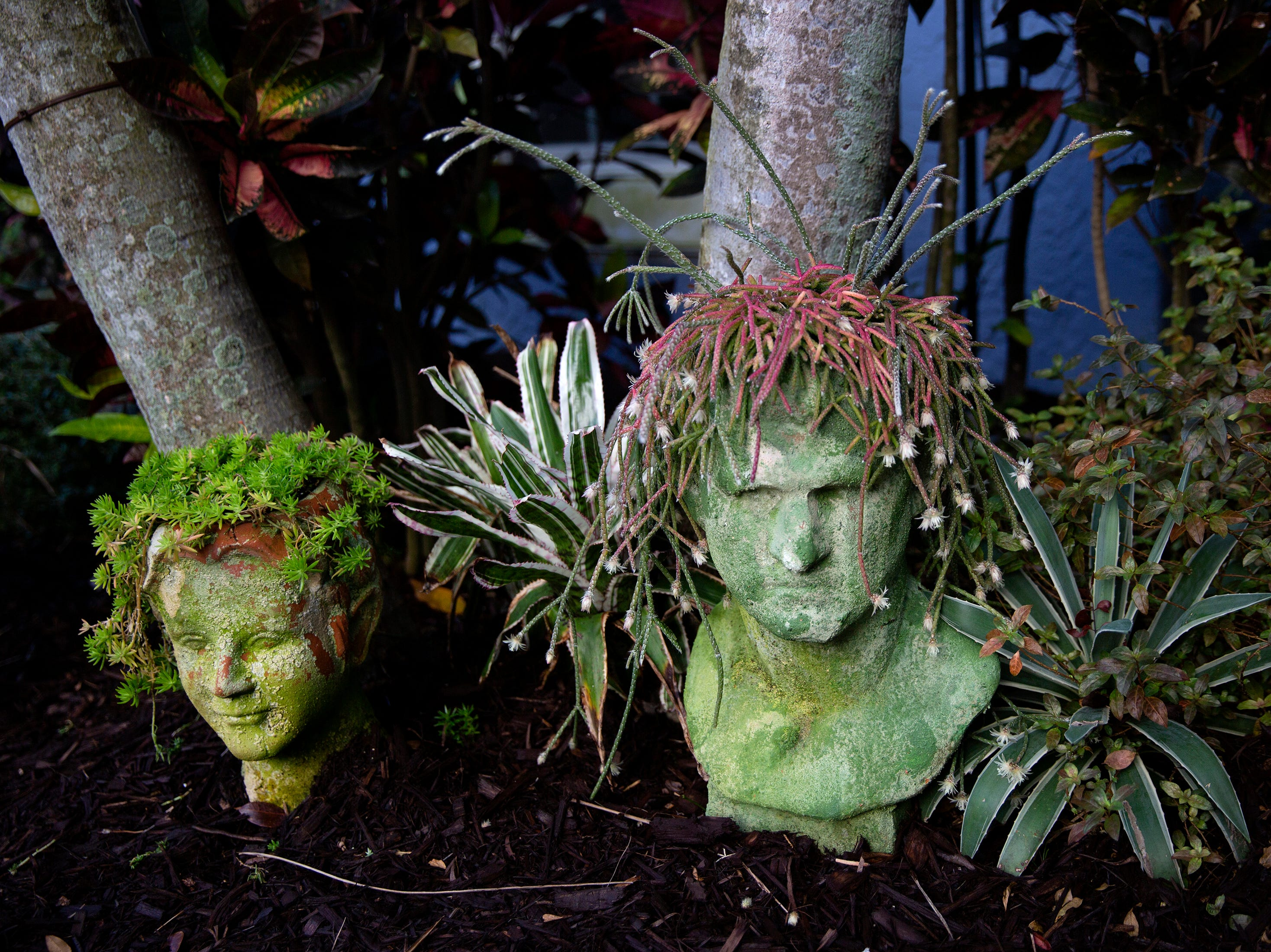 Plants at the home of  Linda LaRue Brown's waterfront Aqualane Shores home is pictured, Thursday, Jan. 24, 2019, in Naples.