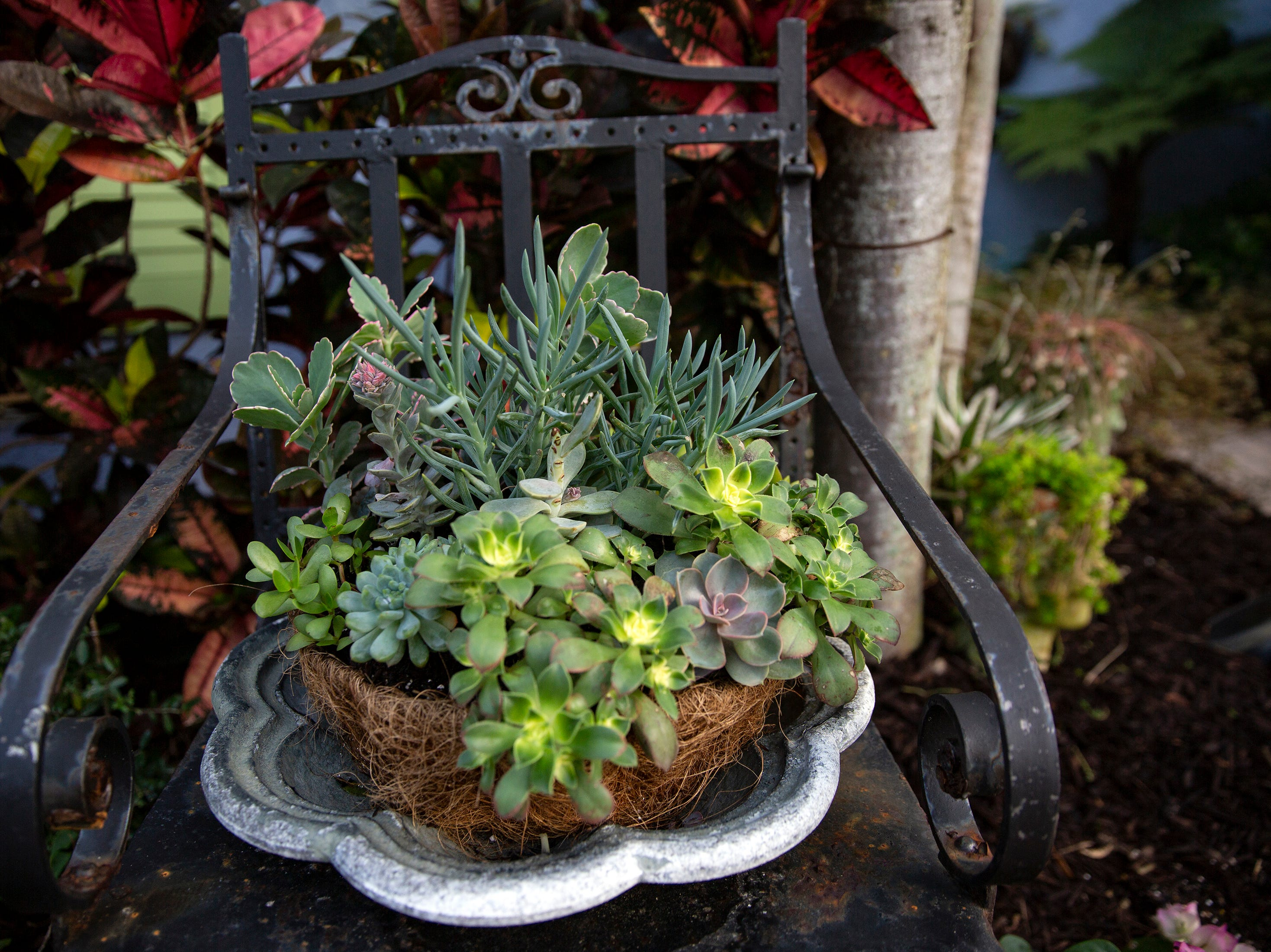 A Succulents display which is featured in the Naples House and Garden Tour is pictured, Thursday, Jan. 24, 2019, in Naples.