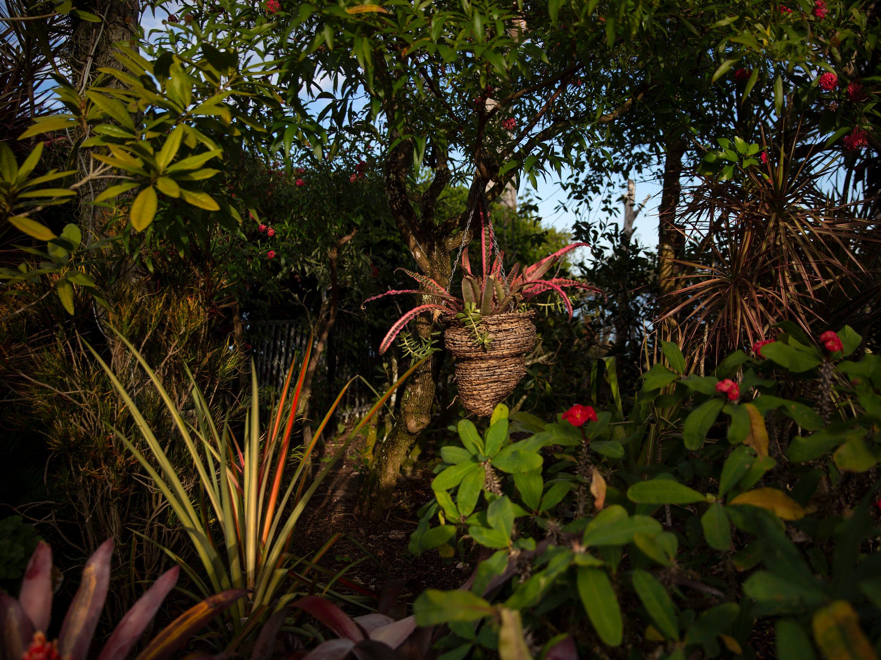 The tropical garden at the Aqualane Shores home which is featured in the Naples House and Garden Tour is pictured, Thursday, Jan. 24, 2019, in Naples.