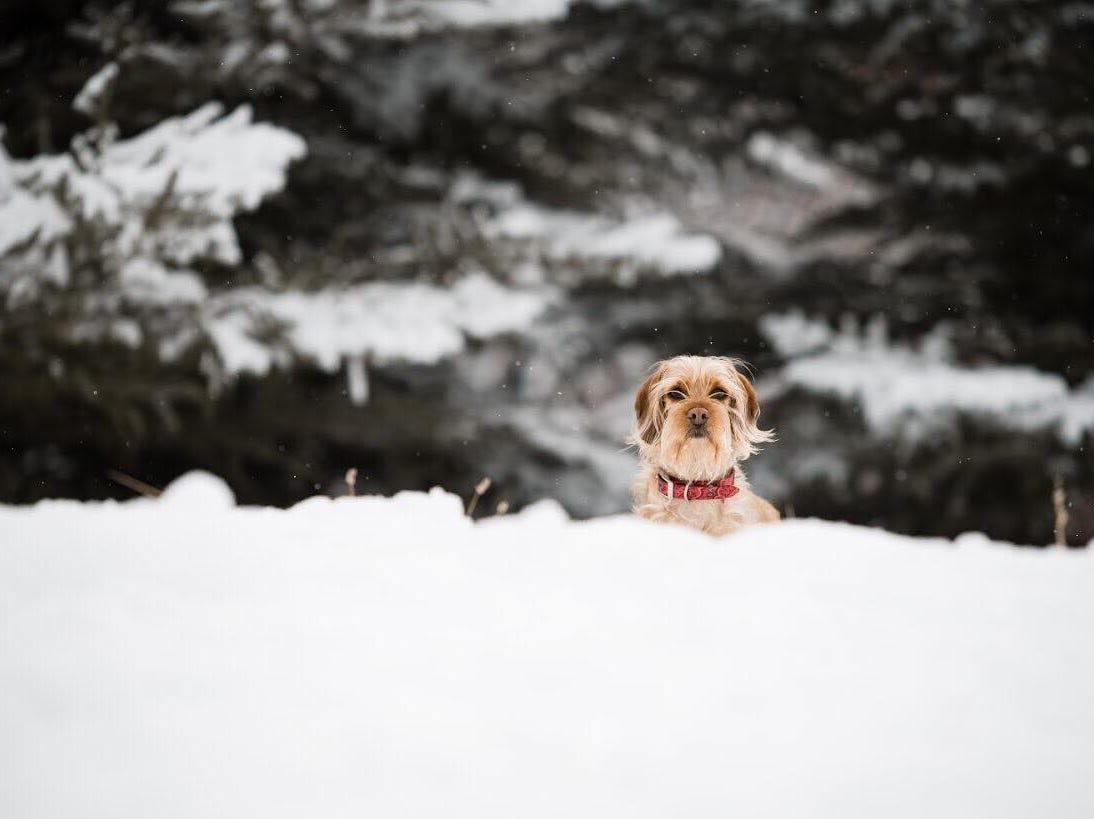 Sophie having fun in the snow.