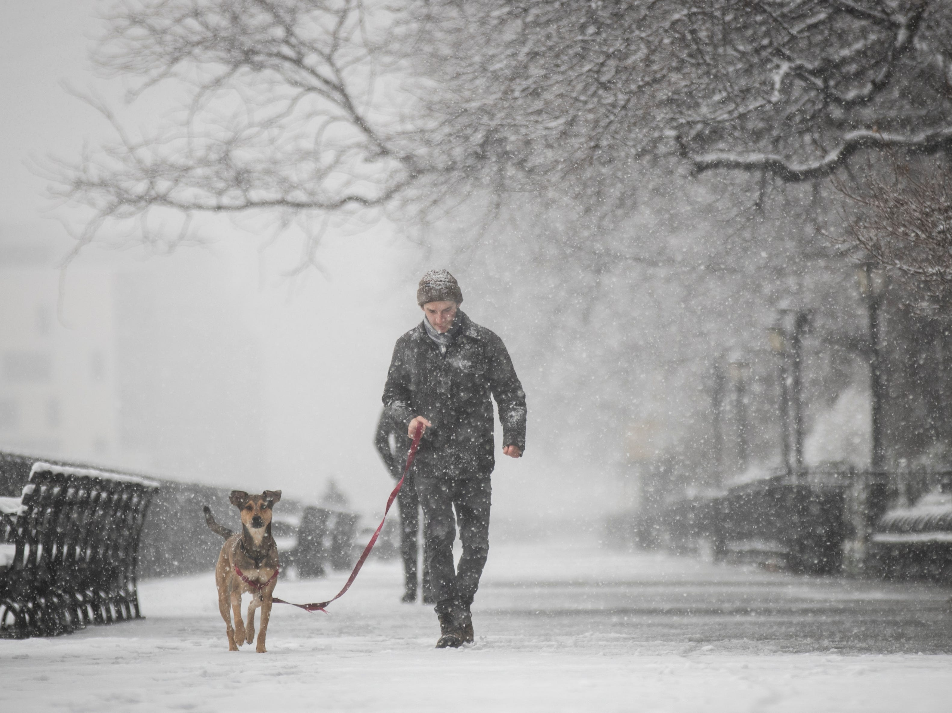 NEW YORK - APRIL 2: A man walk a dog in the snow on the Brooklyn Promenade, April 2, 2018 in the Brooklyn borough of New York City. One day after a mild Easter Sunday, yet another winter storm rolled into New York City overnight and into this morning. A winter weather advisory is in effect until 2pm and the city could see up to 4 inches of snow by midday before it changes over to rain. (Photo by Drew Angerer/Getty Images)