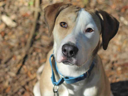 Jyn Erso is a 9-month-old hound mix.