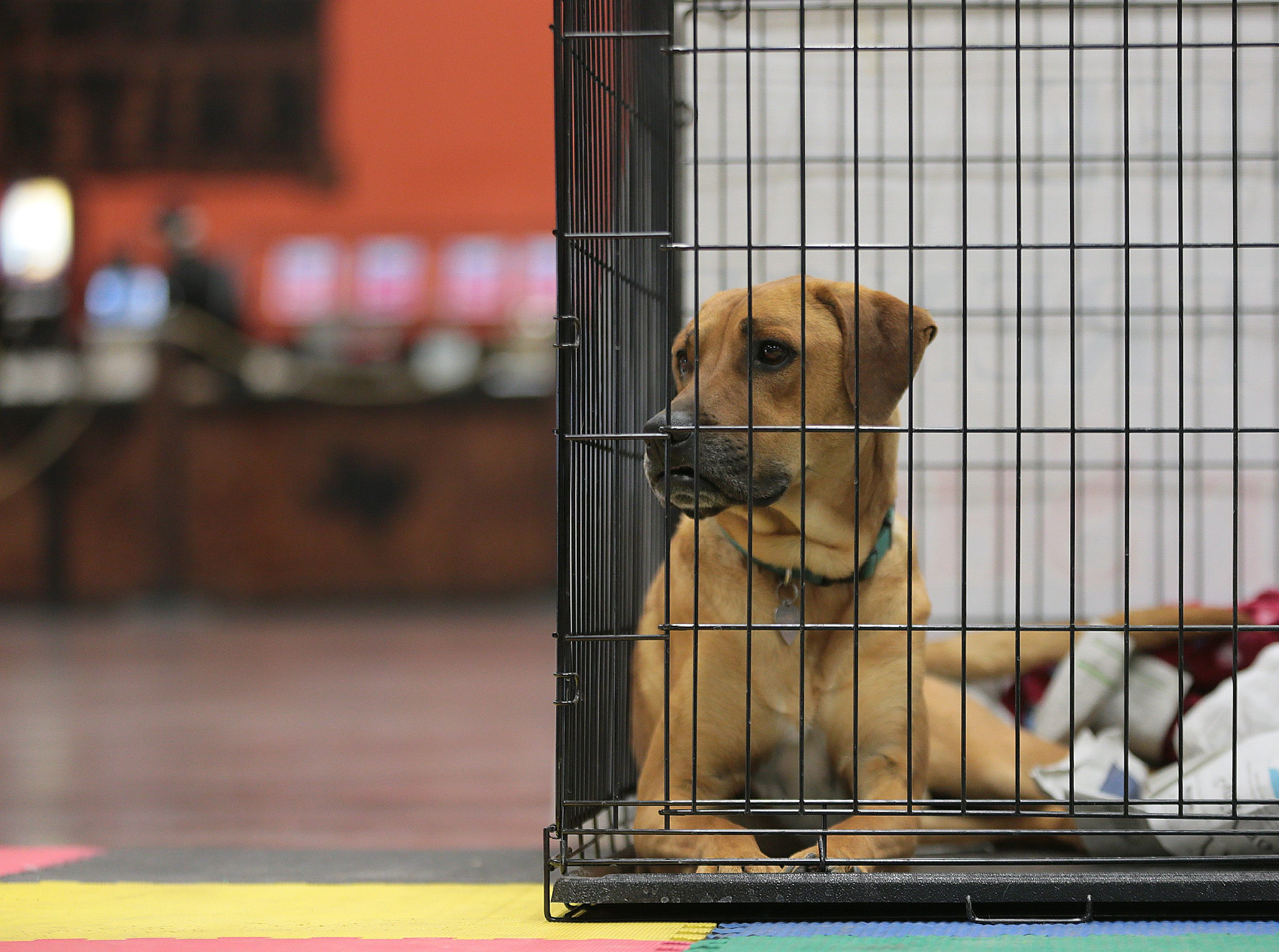 Animal Rescue League of El Paso are adopting pets at the El Paso Spring Home Show and Pet Expo Friday. The show continues Saturday 10-7pm and Sunday 11-4pm.