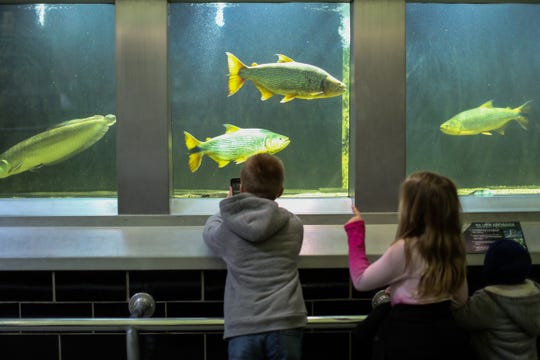 Kids can get up close and personal with the residents of the Belle Isle Aquarium during Shiver on the River.