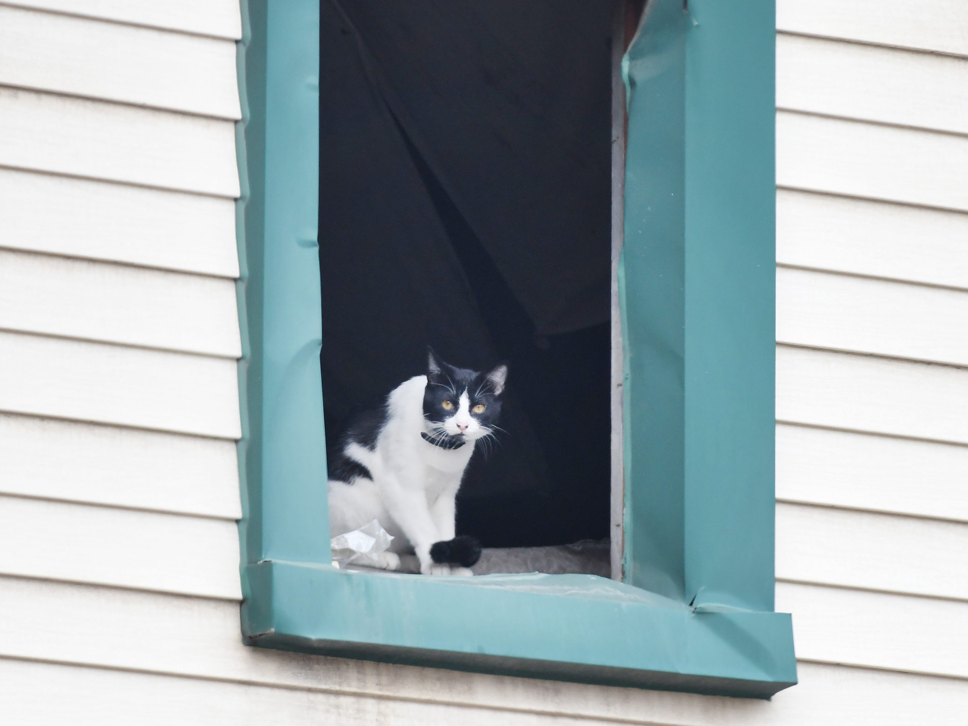 A family cat looks out an upper-floor window of the Grace and Robert Anderson's home in Delray.