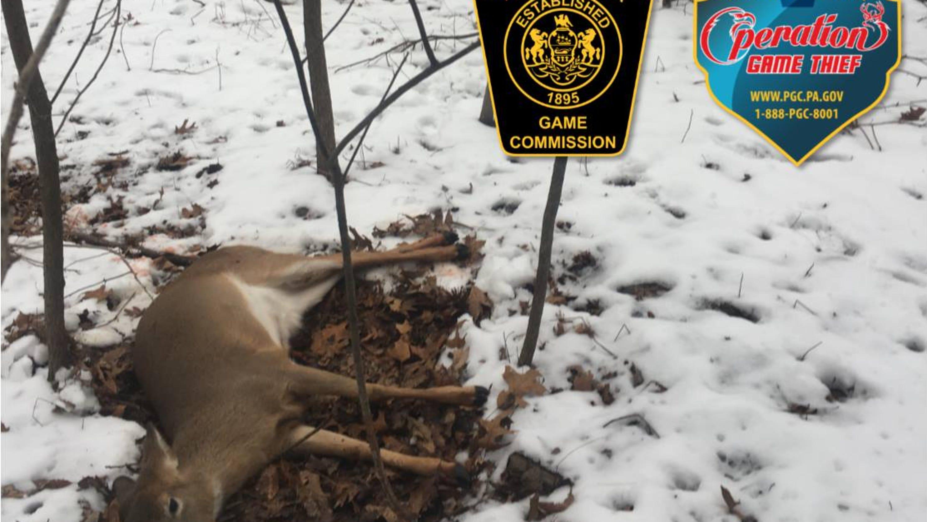 Game Commission seeking info on illegal deer shootings in