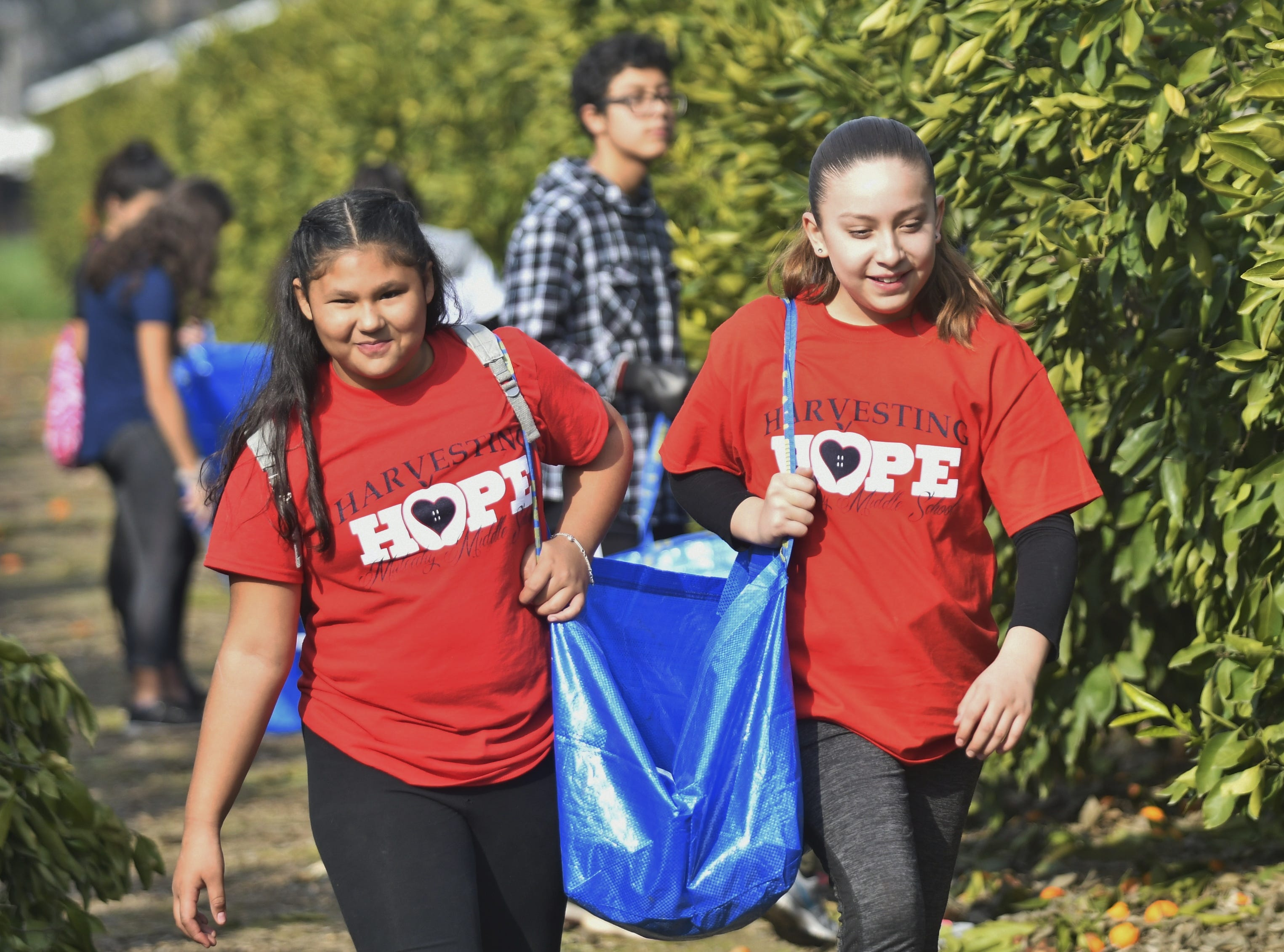On Saturday, more than 100 Tulare County students and parents picked tangerines from a 5-acregrove in Visalia through Harvesting Hope.  What startedout as a class projectfive years ago has turned into a county-wide program involving students from more than a dozenschools and community members.