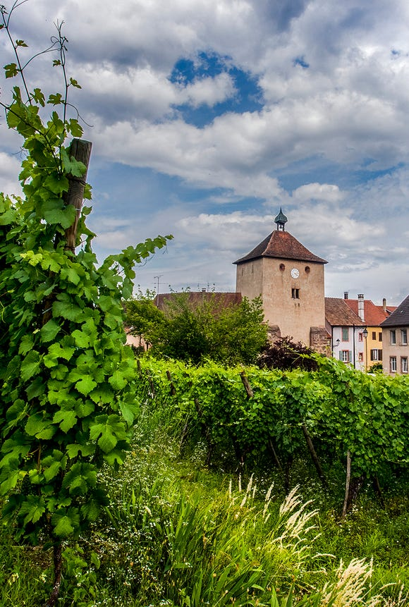 One of the town gates of Turckheim is seen from the neighboring vineyards.