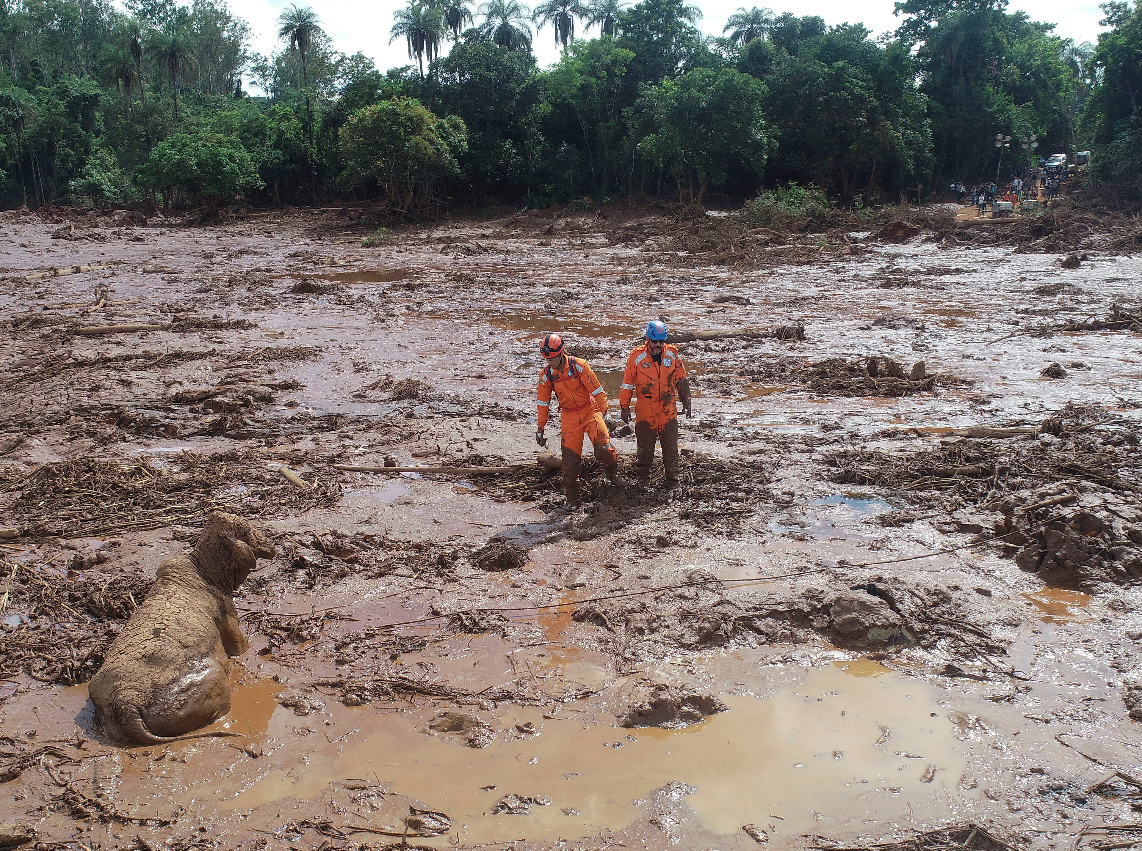 Rescue work try to reach a cow that is stuck in a field of mud, two days after a dam collapse in Brumadinho, Brazil, Sunday, Jan. 27, 2019.