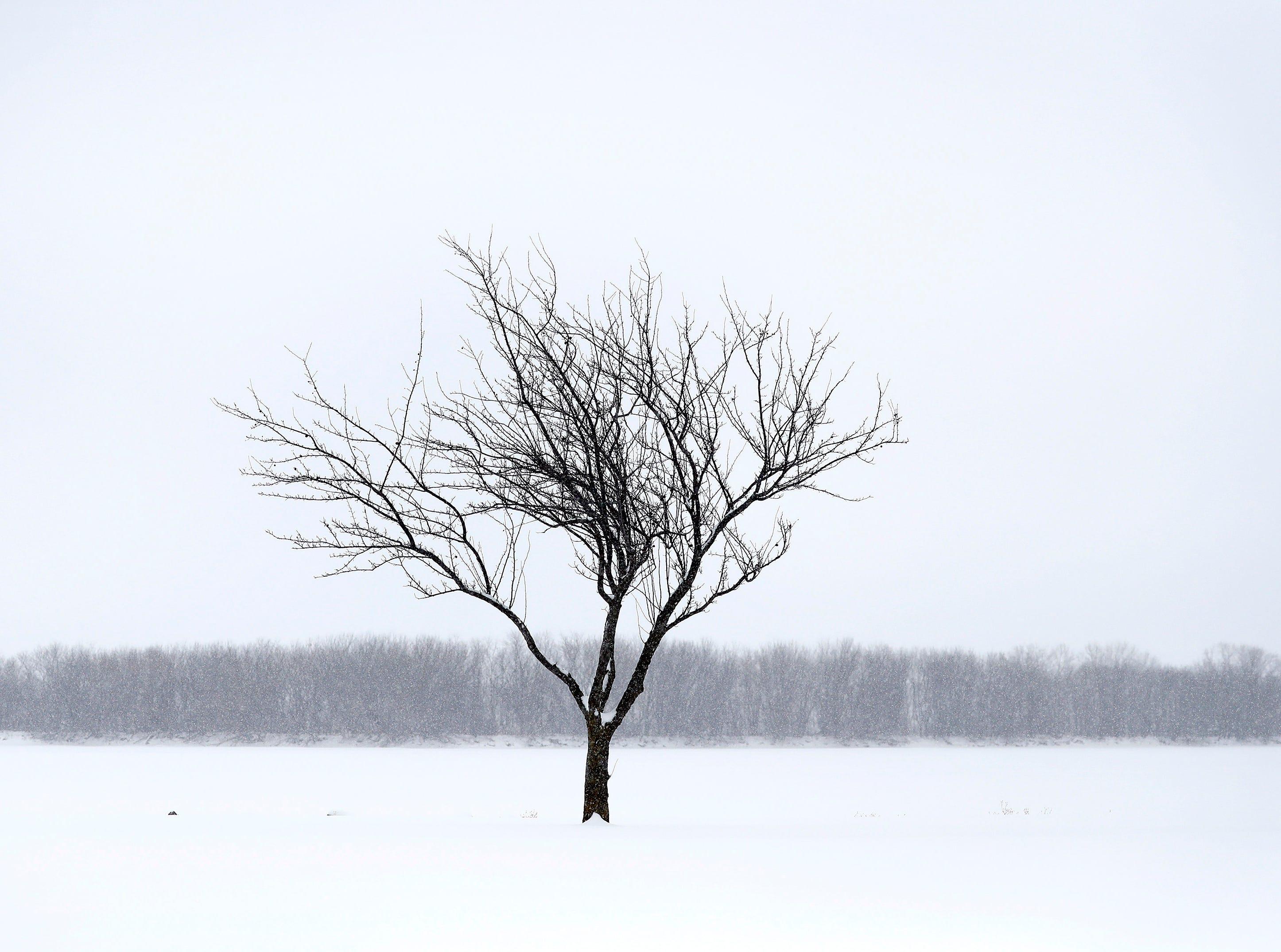 Snow falls on Menominee Park Wednesday, Jan. 23, 2019, in Oshkosh, Wis.Danny Damiani/USA TODAY NETWORK-Wisconsin