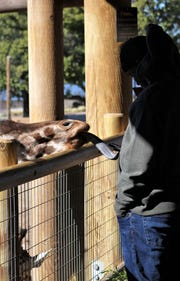 "A giraffe apparently enjoyed Acorye White feeding it lettuce and searches for more while the actor looking at his cellphone at the Abilene Zoo on Monday morning.  Filming of ""Brother's Keeper,"" the story of Abilene High School's 2009 state championship football season, continues this week here."