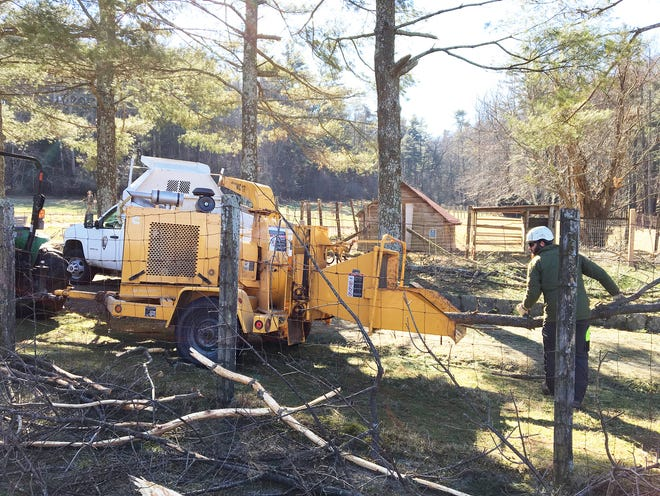 Staff from the Carl Sandburg Home National Historic Site work on Monday, January 28, 2019, to clean up trees and limbs that fell from winter storms during the shutdown.