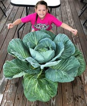 Third grader Madison Candura of Flocktown-Kossman School in Long Valley with her award-winning 14 lb. cabbage