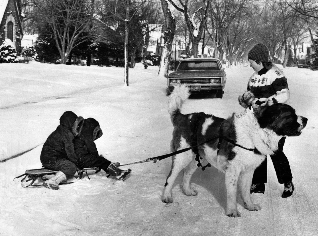 Every time it snows around the Elmer Heiney home in northwest Detroit, Mrs. Heiney harnesses Beatle, the family St. Bernard, for a sled-pulling job. Beatle gets his exercise, and John Heiney, 7, and his brother Robert, 4, get to go along for the ride in 1972.