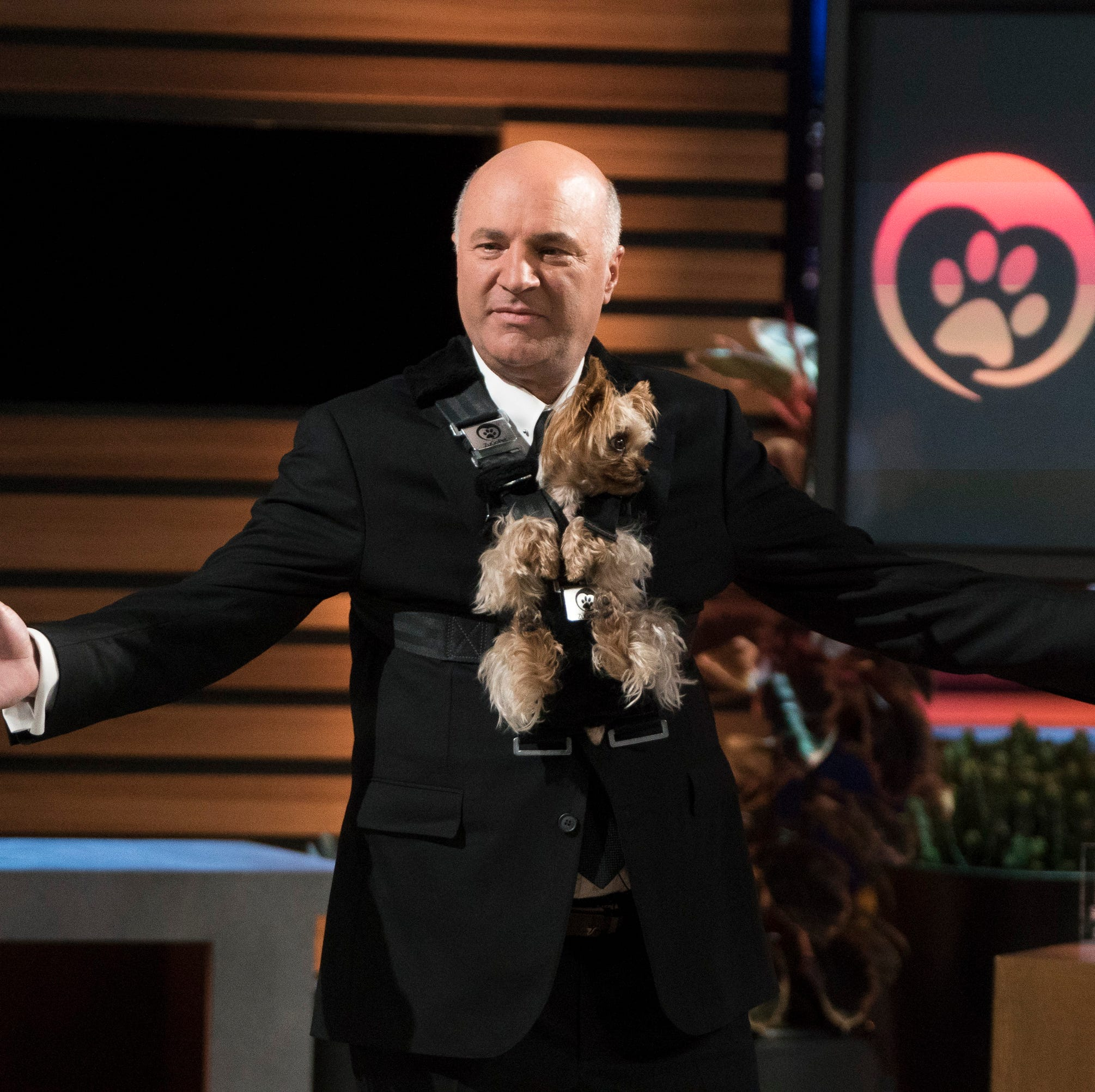Loveland Yorkie lands on 'Shark Tank'