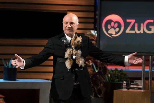 """Shark Tank"" panelist Kevin O'Leary tries out ZuGoPet's Rocketeer Pet with Loveland Yorkie ZuGo in an episode that aired January 27 on ABC."