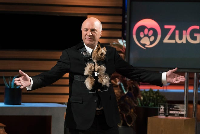 """""""Shark Tank"""" panelist Kevin O'Leary tries out ZuGoPet's Rocketeer Pet with Loveland Yorkie ZuGo in an episode that aired January 27 on ABC."""