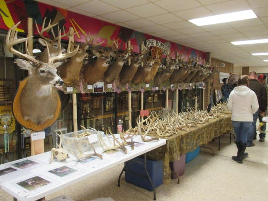 A table with trophy deer mounts and deer antlers is always a popular stop at the S-VE Sportsman Show, which takes place this weekend at Spencer-Van Etten High School.