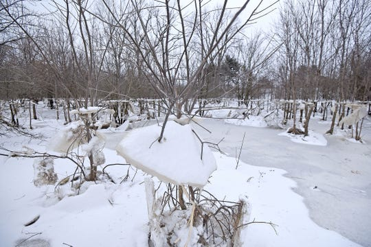 Surface ice that once covered flood waters remain in trees after the waters receded near the intersection of Ohio 96 and Ohio 13 north of Mansfield.