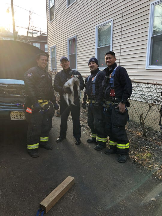 Firefighters with Stanley the cat, who was rescued from inside an engine block.