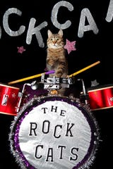 The Amazing Acro-cats are performing for two shows only at the Rio Grande Theater on Wednesday, Feb. 9 at 3 p.m. and 7 p.m.