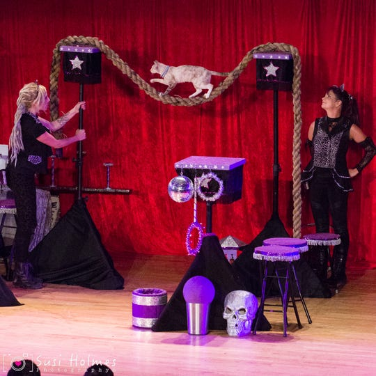 The Amazing Acro-cats will be performing in Las Cruces Wednesday, Feb. 9 at the Rio Grande Theatre.