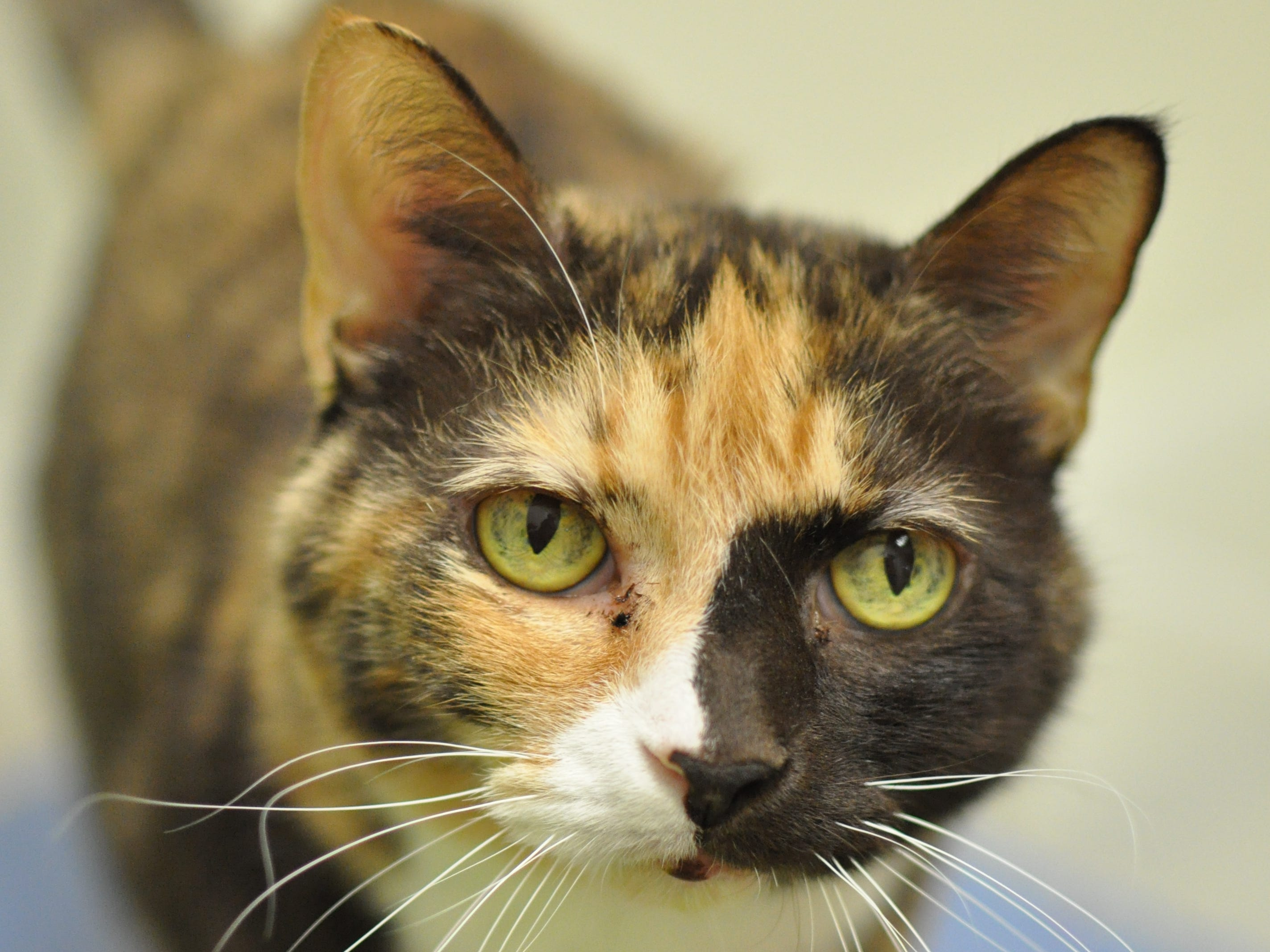 Lily, 13, is sweet and sensitive and wants to find her forever home. She is spayed.