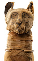 "Mummified cat part of the ""Mummies of the World"" exhibit. The exhibit will be featured at the Arizona Science Center from Feb. 10-Sept. 2, 2019."