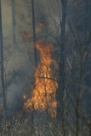 Dryness and wind are factors in wildfire danger during winter.