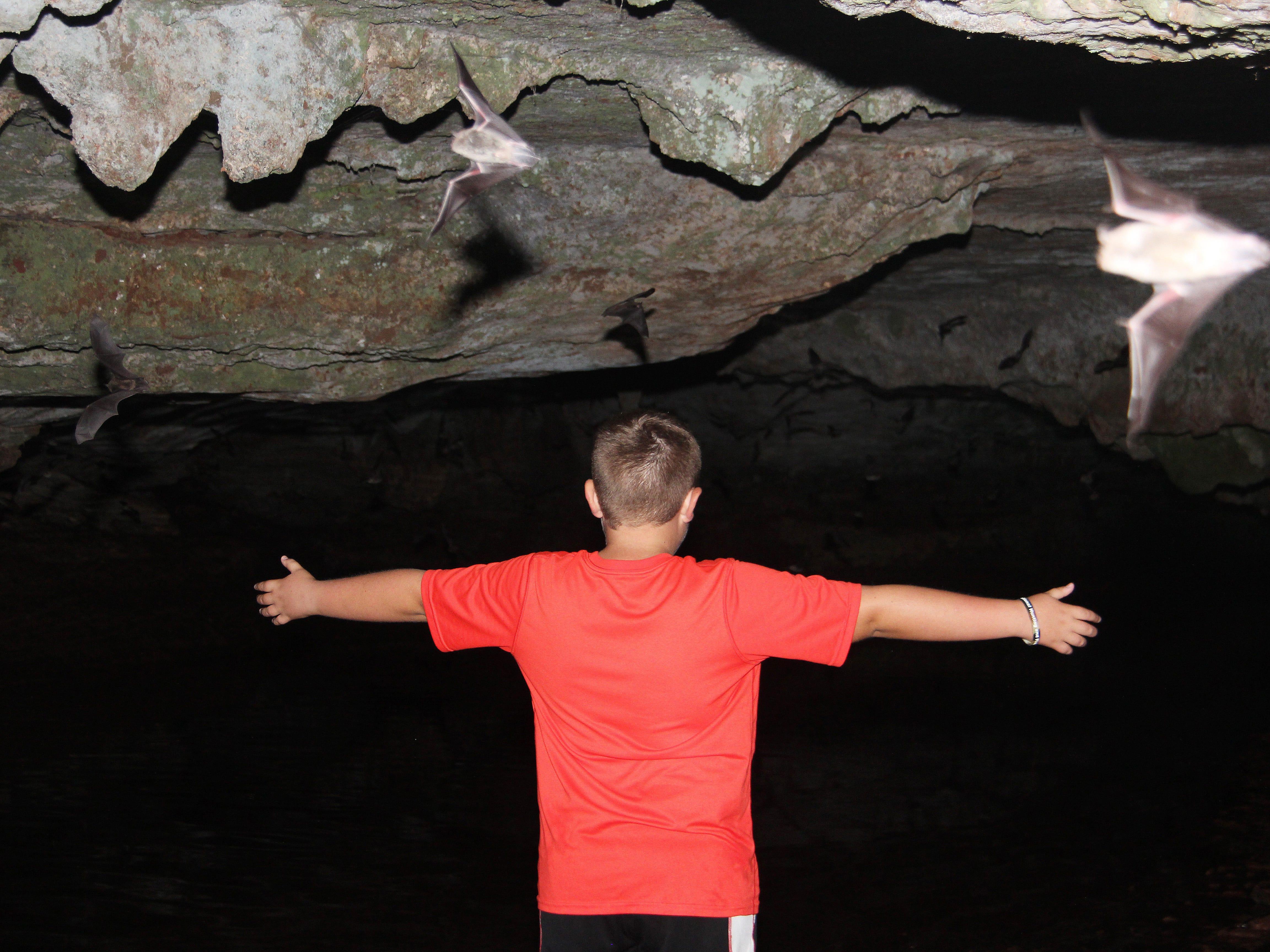 Gray bats swarm around Evan Breuer, 11, at Sequiota Cave.