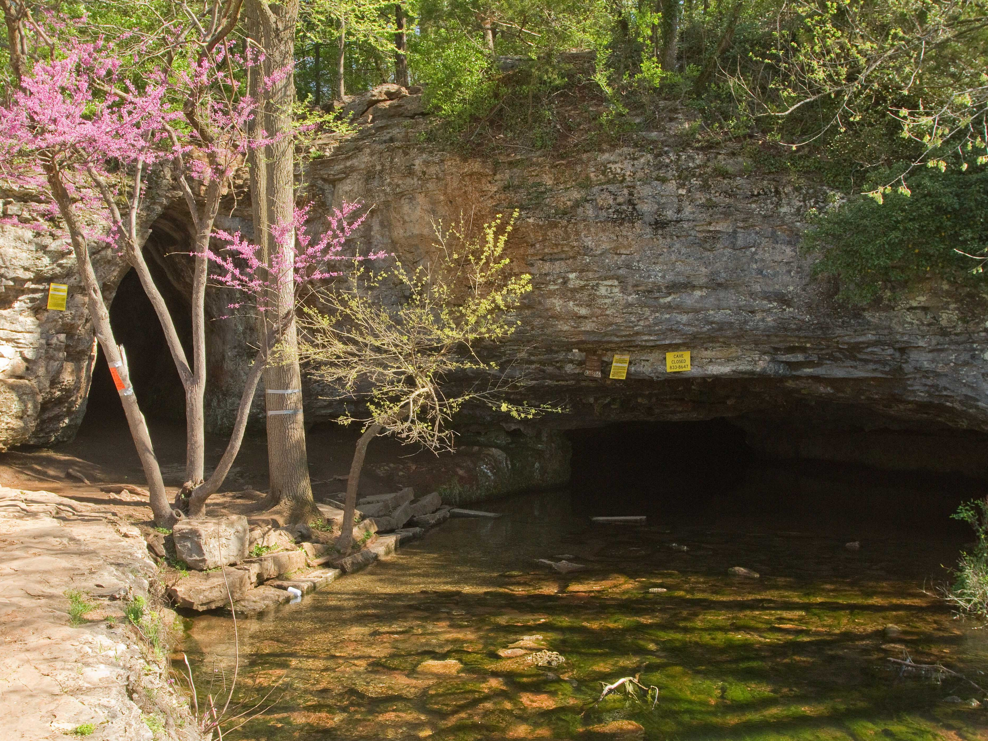 The caves at Sequiota Park are clearly marked as closed to deter humans during the gray bat migration.