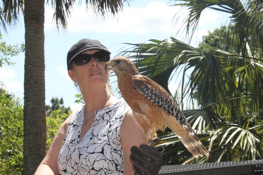 Treasure Coast Wildlife Center Care Specialist Vicky Green holds one of the center's red-shouldered hawks.